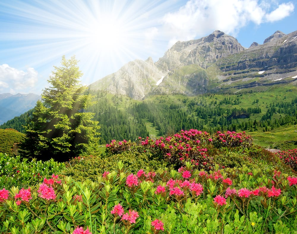 Adamello-Brenta park, the Dolomites