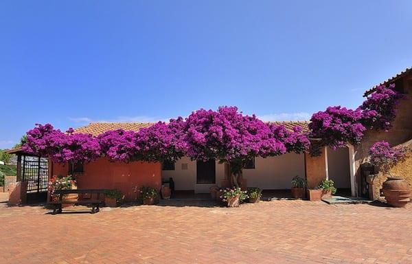 Flowers cover a tiny house in Giannutri. Photo by Simonetta Viterbi
